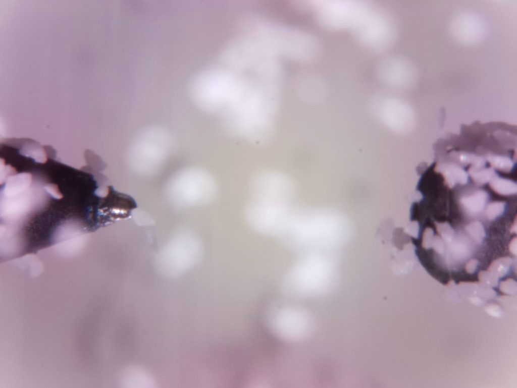 One of the first images that the team in Frankfurt received from the International Space Station (ISS). It shows the two electrodes and the dust particles.