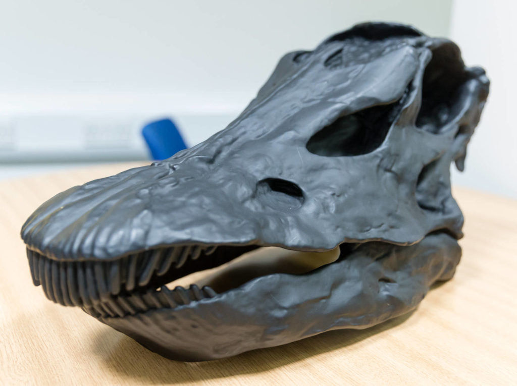 This is a high-resolution 3D model of a dinosaur skull created by Kate Burton using ZEISS scanning electron microscopes and a ZEISS X-ray microscopes, 3D visualization software, and a 3D printer to make the objects tangible and therefore accessible to everyone.