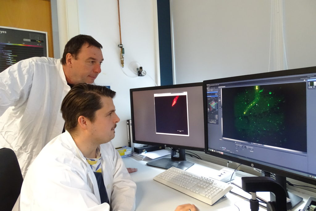 Axel Mithoefer and Veit Grabe looking at the new images of infected Arabidopsis roots generated with a ZEISS light sheet microscope.