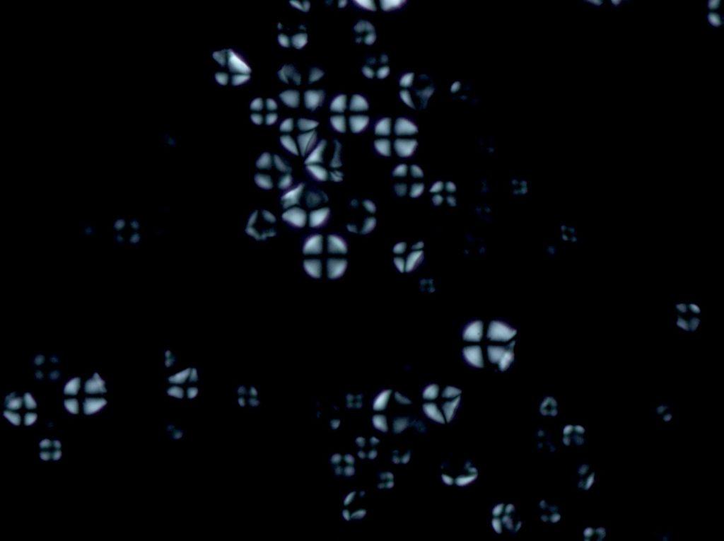 Cassava starch grains (Manihot sculenta) imaged using polarization microscopy.