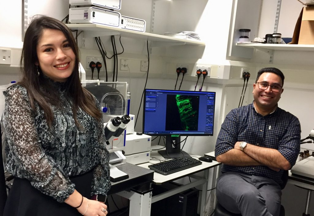 Live Cell Imaging to Study Neuron Development