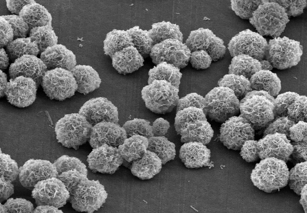 Gallic Acid Nanoflower