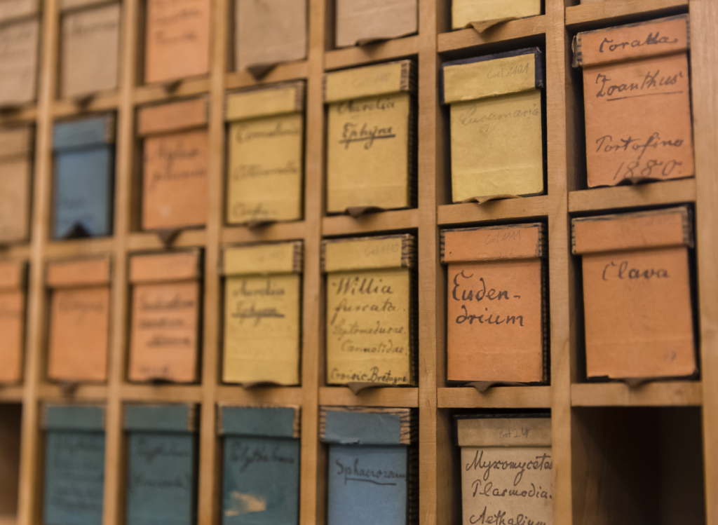 Shelf with Haeckel slides