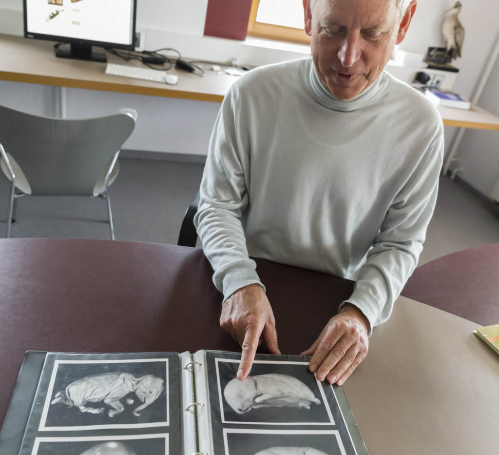 Prof. Fischer is showing the CT scans of the elephant embryos
