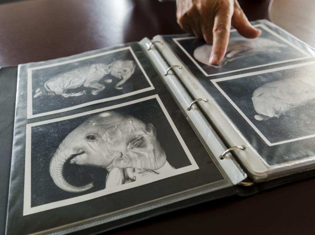 Elephants Under the Microscope