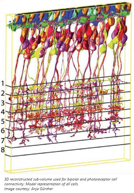 3D Avian Retina Cells Visualization