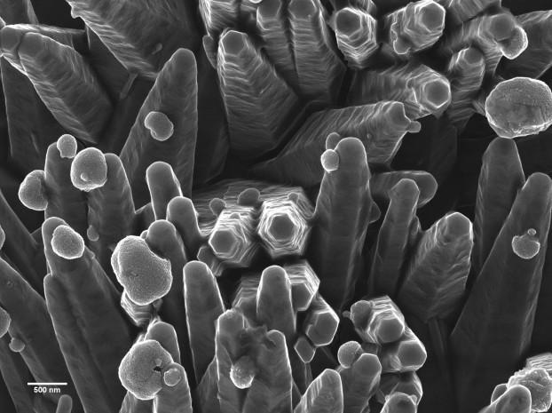 Helium-Ionen-Mikroskopie von ZnO-Nanostäbchen/Ag-Nanopartikeln als Materialien für Biosensoren. Mit freundlicher Genehmigung von Eric Flaim, Universität Alberta.