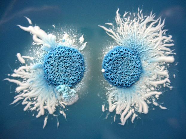 FungiNet_Candida albicans-Kolonie