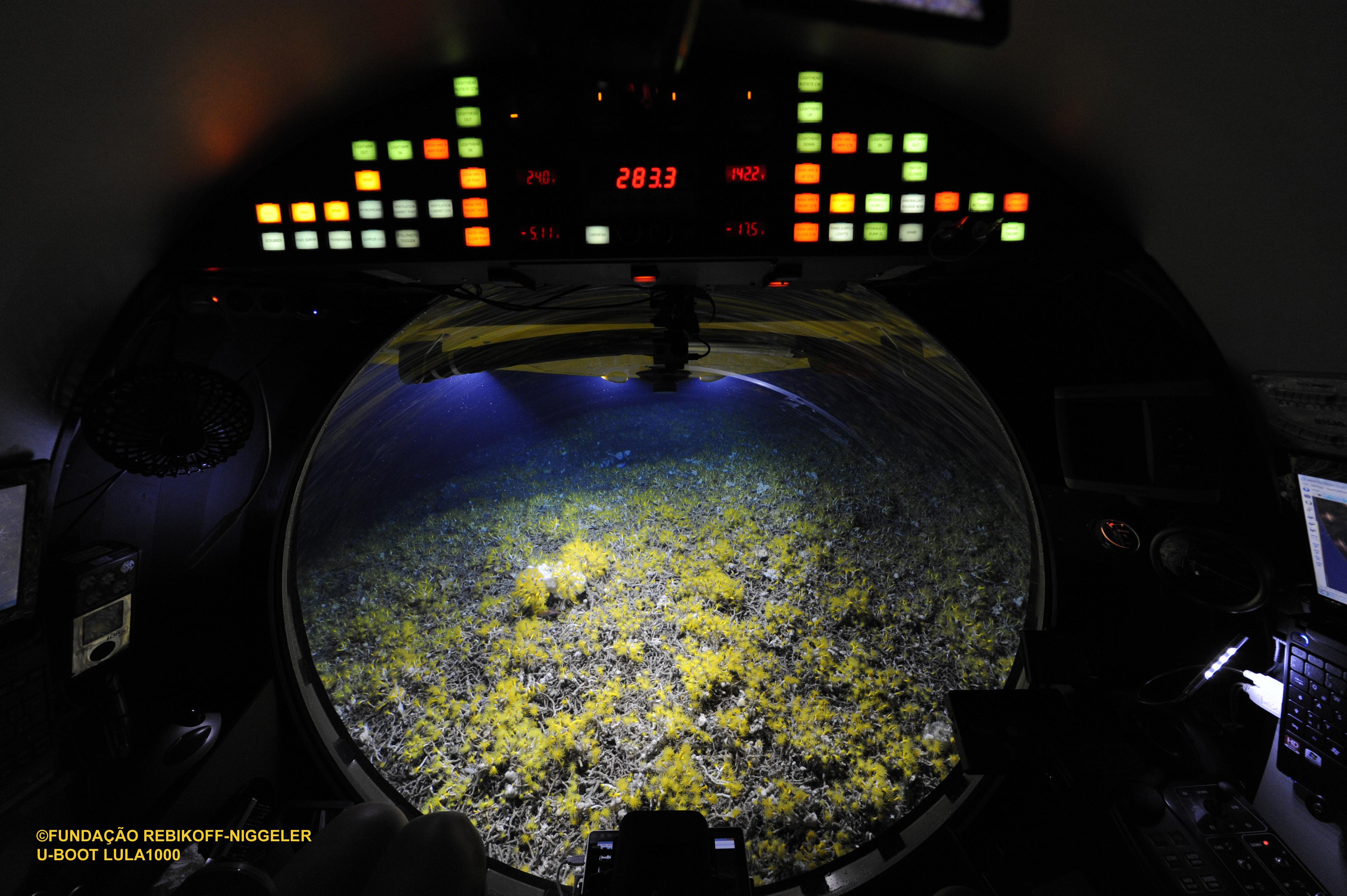 Korallenriff-in-300-Metern-Tiefe