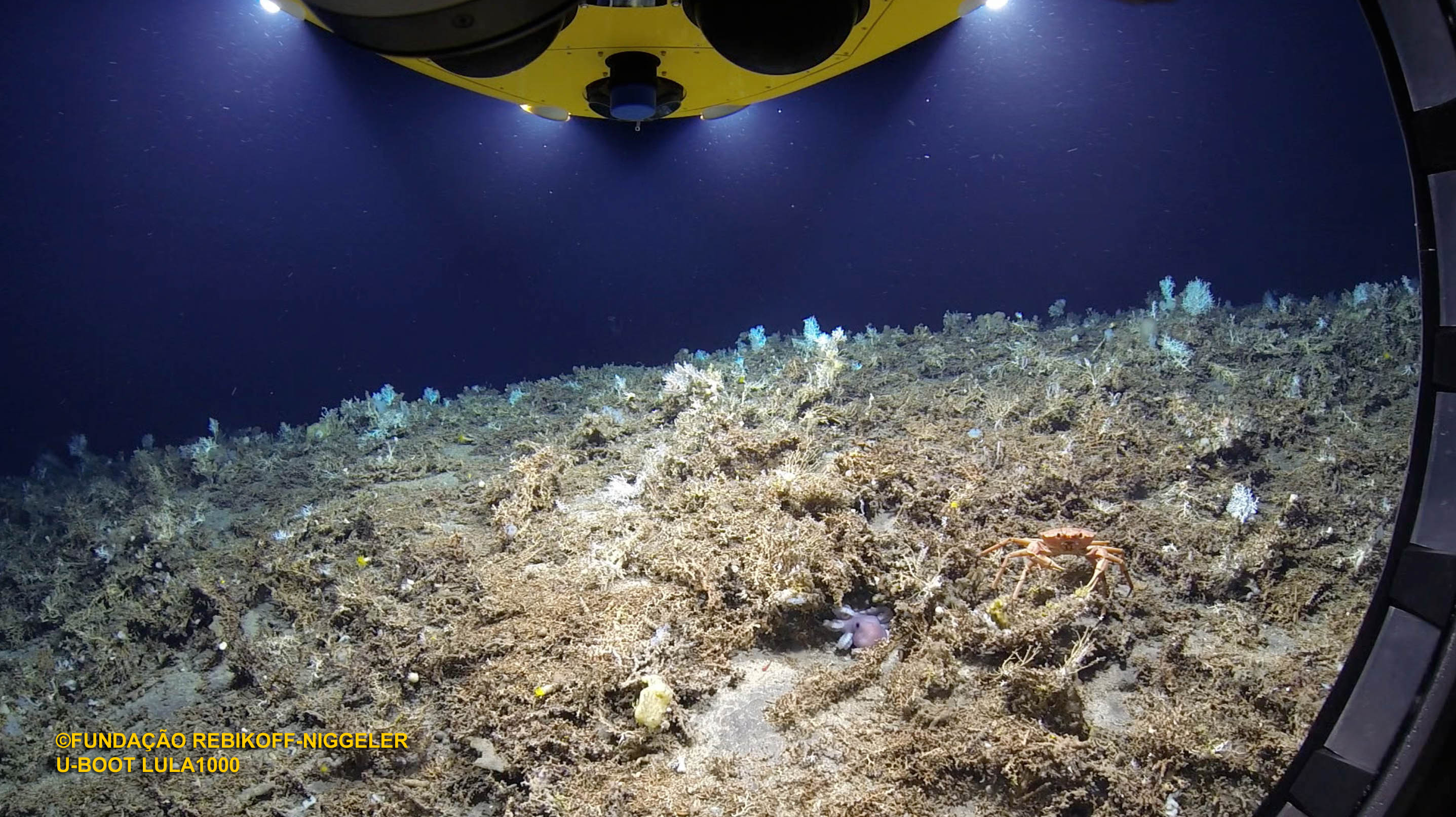 Riff-1000-Meter-Tiefe