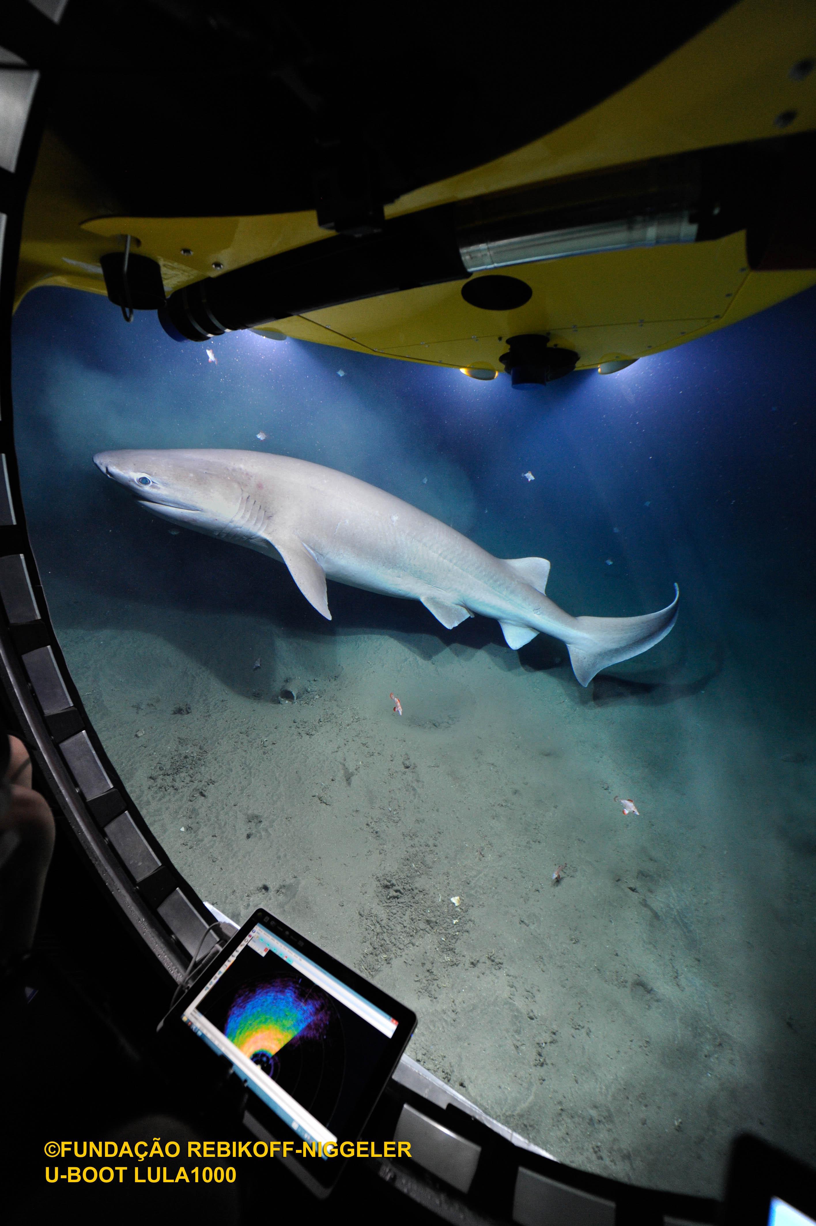 Sechskiemenhai