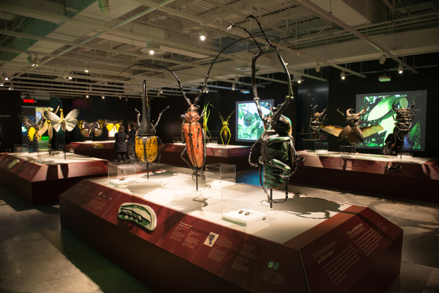 Exhibit 'Bugs: Outside the Box'. Credit: Alex Mcdonald / Canadian Museum of Nature, 2015.