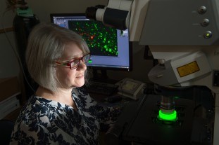 Connie King, Biomedical Sciences Research Associate, demonstrates the new confocal microscope adapted for CLARITY while imaging a mouse brain. September 15, 2015