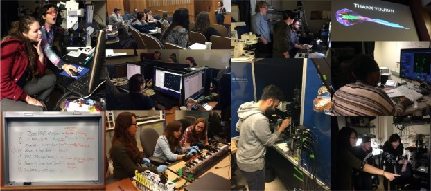 "Favourite moments from the ZEISS Berkeley BrainMIC course ""4D Advanced Microscopy of Brain Circuits"""