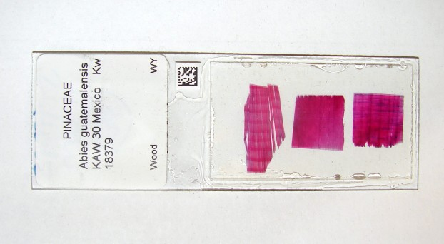 Barcodes will be attached to slides before scanning (Photo: A.Musson/Royal Botanic Gardens, Kew).
