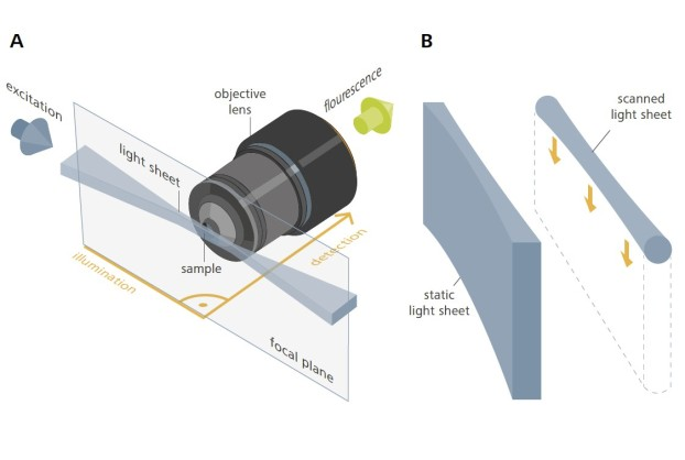 The light sheet is projected onto the sample form the side (A), i.e. perpendicular to the optical axis of the detection lens, hence illuminating the microscope's entire focal plane. (B) The light sheet is generated either statically using a cylindrical lens or dynamically by high-frequency scanning of a laser beam. (Taken from Olaf Selchow and Jan Huisken, 2013)
