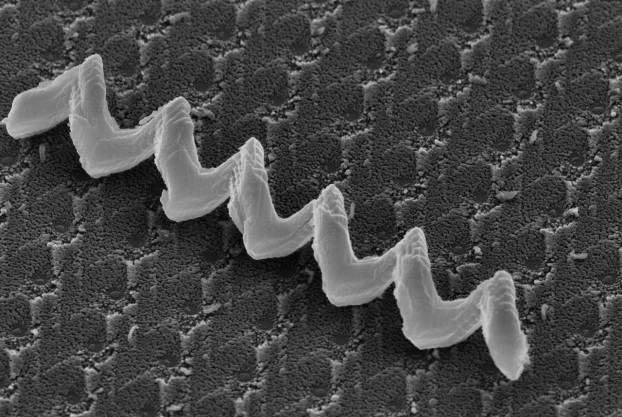 High-resolution FE-SEM image of a glancing angle deposited (GLAD) nanostructured Si helix. Courtesy of UofA nanoFAB & Peng Li.