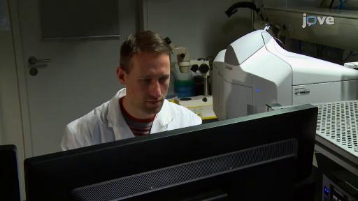 Using Light Sheet Fluorescence Microscopy to Image Zebrafish Eye Development. Jaroslav Icha et al, JoVE 2016.