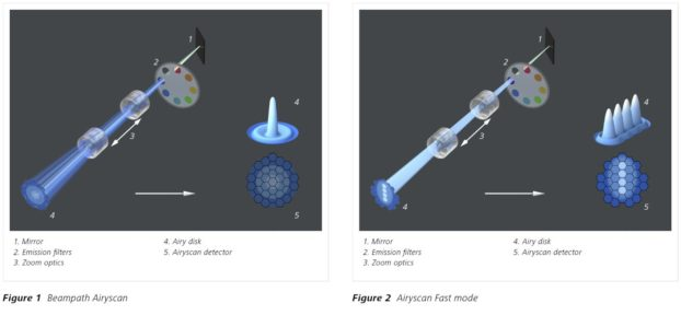 Principle of ZEISS Airyscan and Airyscan Fast Mode