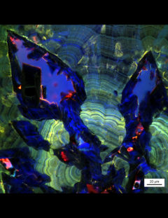 ZEISS LSM 880 Airyscan superresolution image showing nanolayers and massive dissolution of Euhedral COD crystals and recrystallization of COM crystal inside the void space, Image provided by Mayandi Sivaguru, Jessica Saw and Bruce Fouke.