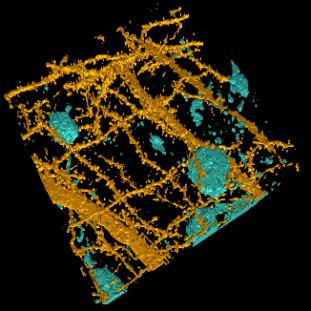 Neuron Segmentation Workflow