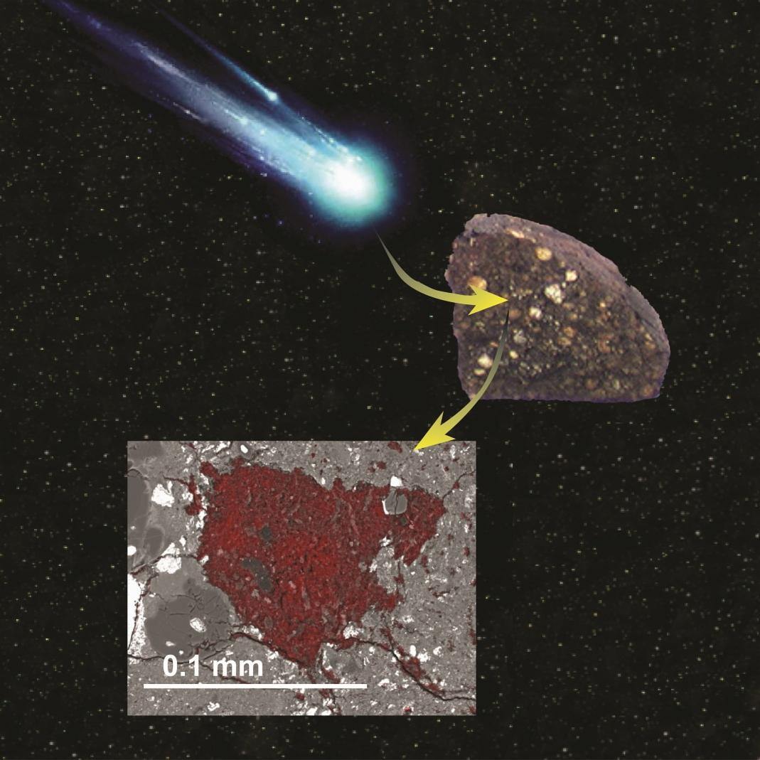 The lucky pathway of LaPaz 02342 xenolith from a disrupted comet